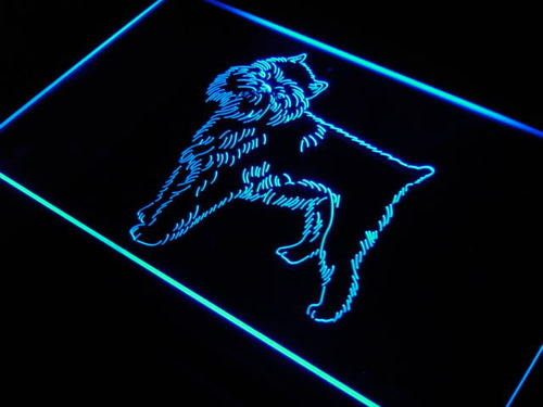 Brussels Griffon Dog Pet Display Neon Light Sign